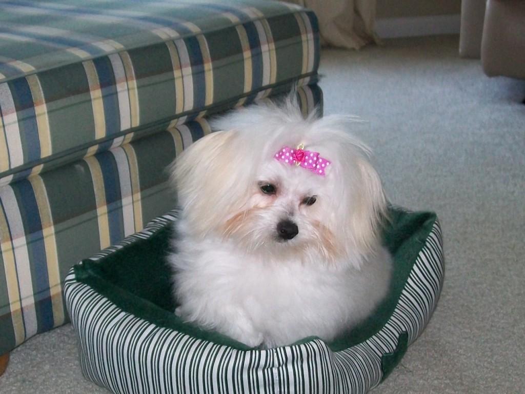 Rebecca's Pup